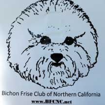 bichon for website